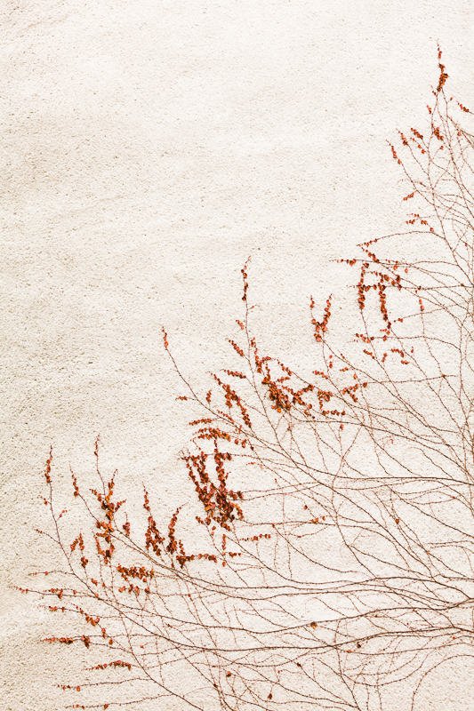 Detail of a creeping plant on an anonymous wall. Canon 5D Mark II, EF Canon 70–200 mm F2.8 IS II, 1/60 s, F4.5, ISO 160, focus 70 mm.