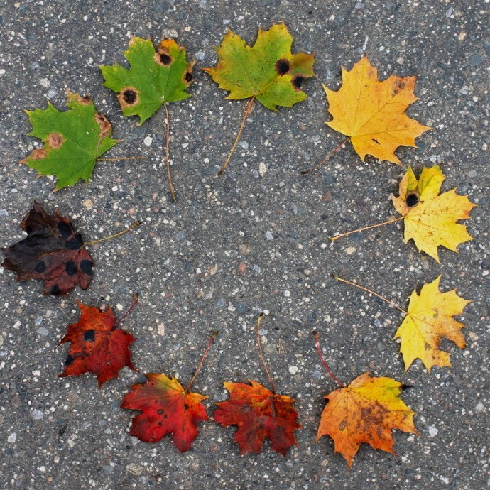 Leaves in a circle. Canon EOS 70D, Canon EF35mm, f/1.4L USM. 1/40 s, F3.5, ISO 400.