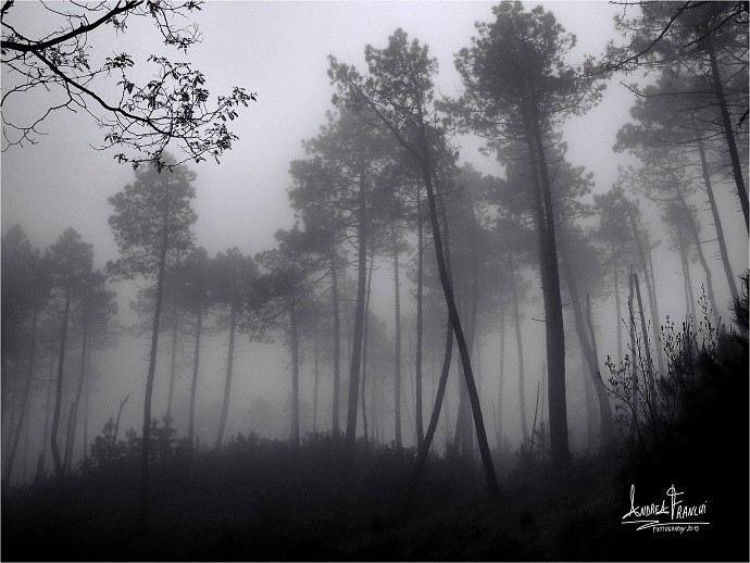 A foggy forest can be a very interesting subject. This photo has both background and foreground, and that's important in nature photography. But the foreground is located at the top left corner and comprises a few branches of another tree. Author: Andrea Franchi