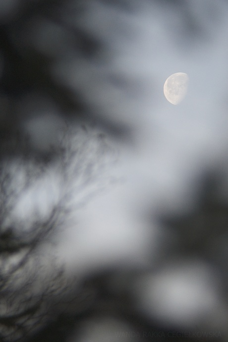 This photo's author has captured the moon differently than we're used to. I appreciate his creativity. Author: Rakka