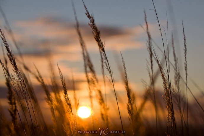 A grass-scape with a background of sky. Canon 5D Mark II, Canon EF 70–200/2.8 II IS, 1/1000 s, f/5.6, ISO 100, focus 70 mm