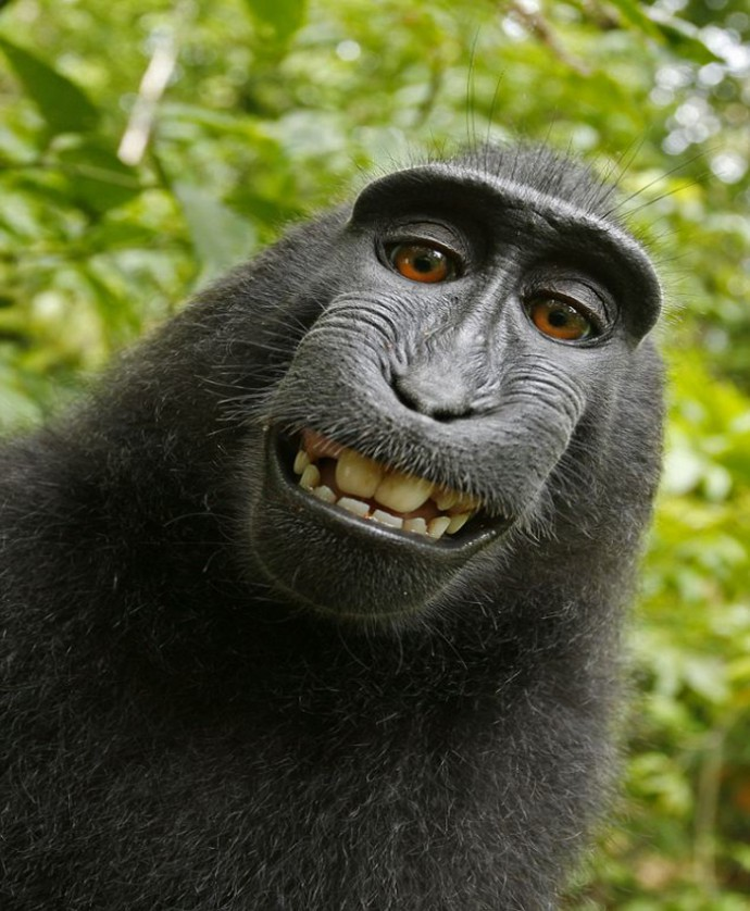 monkey_selfportrait2