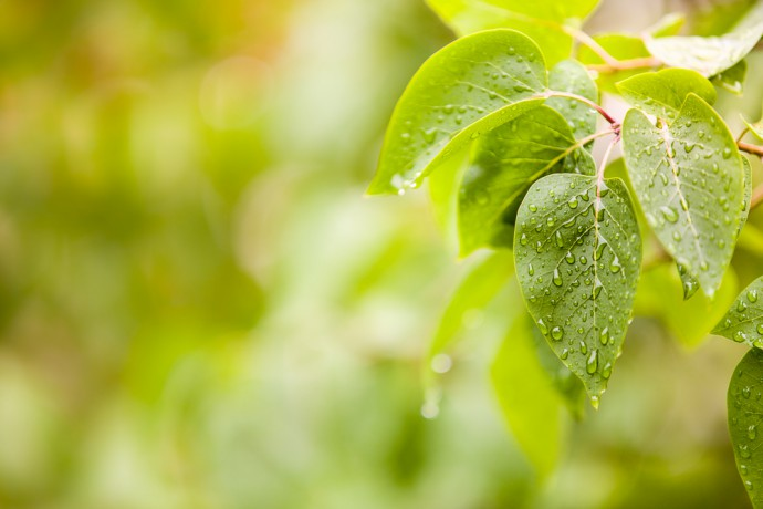 Leaves after the rain. Canon 5D Mark III, Canon EF 70–200/2.8 IS II, 1/250 s, f/2.8, ISO 100, focus 168 mm