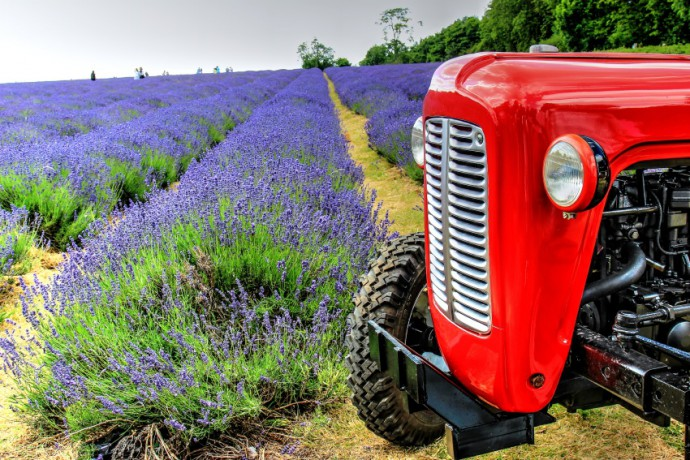 What with the striking contrast of the lavender lanes and the red tractor, we couldn't help but include this photo in today's Colors edition of Editor's Choice on Zonerama. Photo: Milander