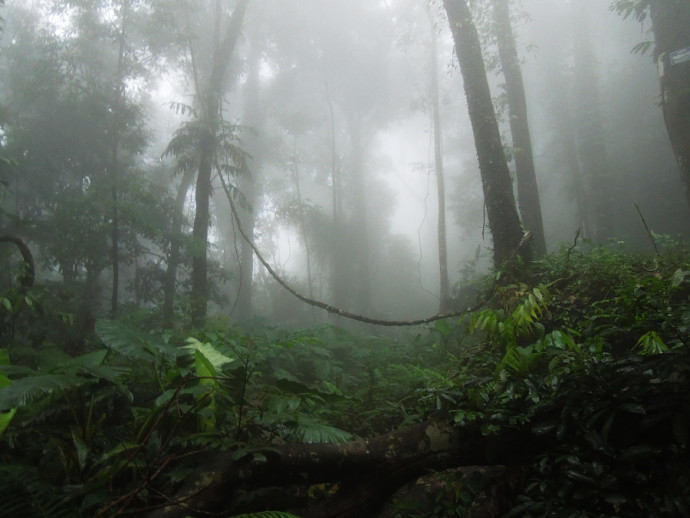This photograph exudes the mood and humidity of the rainforest. Although this picture is not brimming with technical quality, it's also not lacking an essence. Author: simon