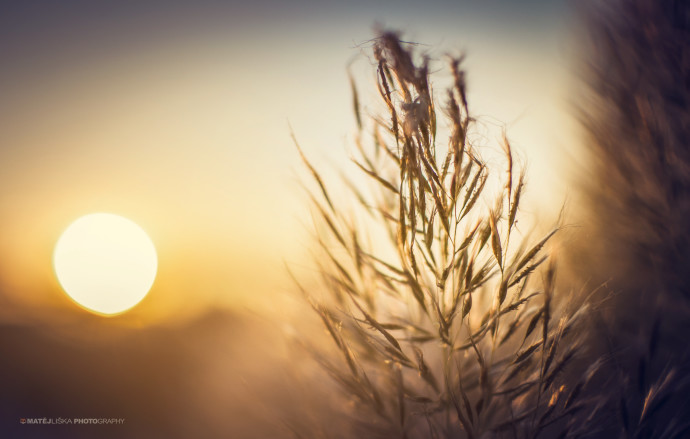 A close-up with the sun in the background (Nikon D7000, Nikon 35mm f/1.8).