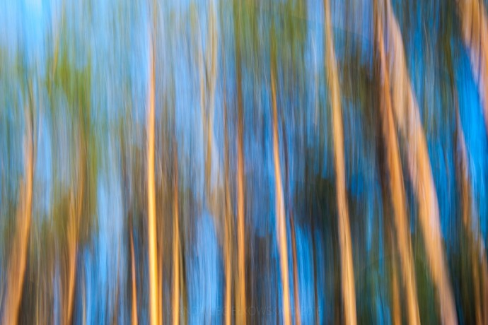A forest, or abstract art? Photo: Rakka ǀ simple stories