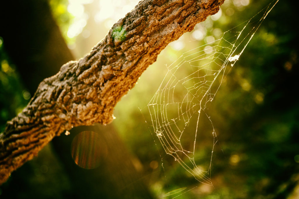 A spiderweb photographed against the light. I used reflections in the lens to make the picture more special. Canon EOS 7D, EF-S 15-85/3.5-5.6 IS USM, 1/50 s, f/4.5, ISO 100, focal length 32 mm (51 mm equiv.)