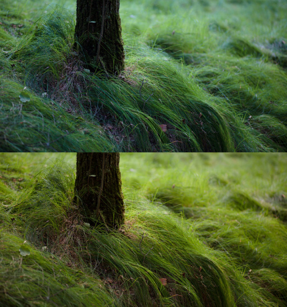Above: the original picture with a color temperature of 4300 K. Below: the edited picture with a new temperature of 5400 K. Canon 5D Mark III, Canon EF 85/1.8, 1/80 s, f/8.0, ISO 500, focal length 85 mm