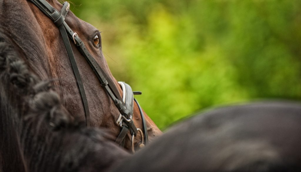 Learn How To Photograph Horses Learn Photography By Zoner Photo Studio