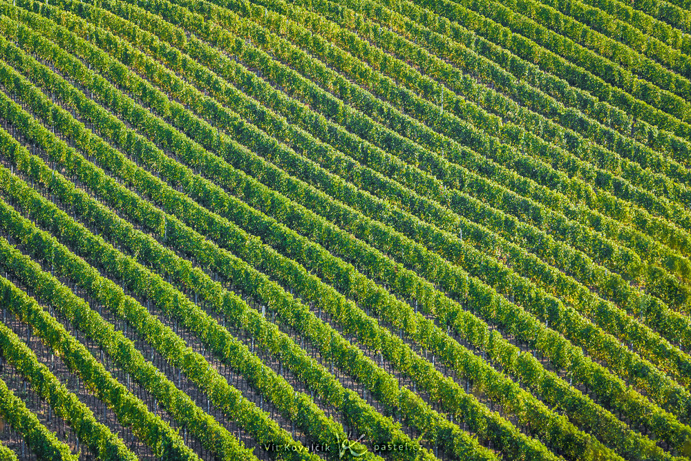 Diagonal lines in Moravian vineyards. Canon 5D Mark II, Canon EF 70-200/2.8 II, 1/50 s, f/7.1, ISO 400, focal length 200 mm
