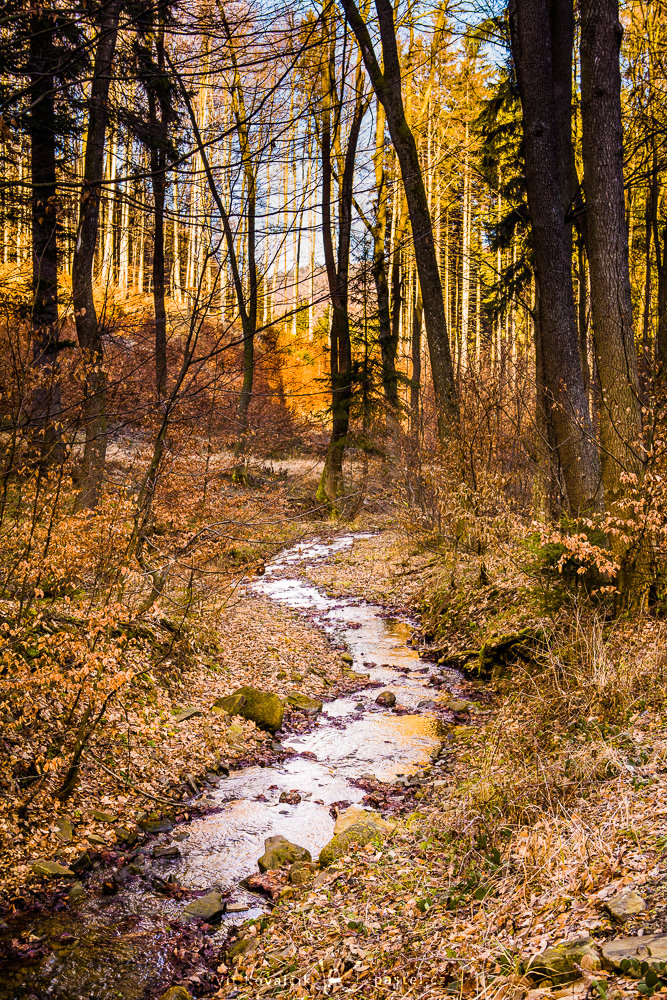 The stream forms an S. Canon 5D Mark III, Canon EF 24-70/2.8 II, 1/40 s, f/8, ISO 200, focal length 43 mm
