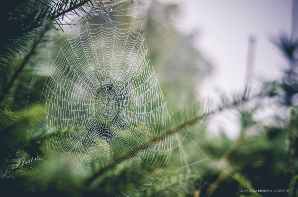A hidden spiderweb. Nikon D7000, Nikkor 50mm f/1.8 D, 1/1500, f/1.8, ISO 100