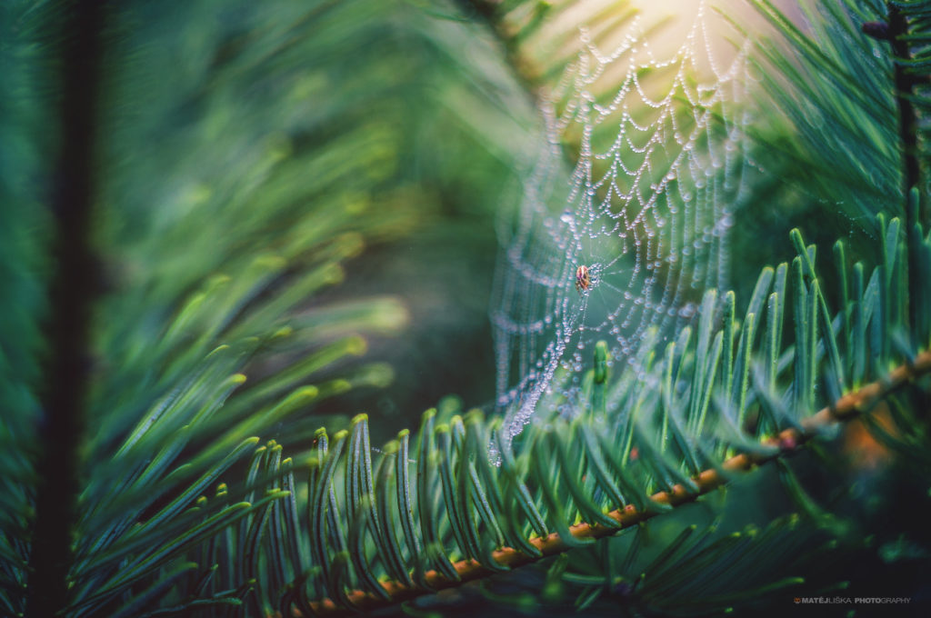 A small garden spider in the middle of its web. Nikon D90, Industar-61 2.8/53, 1/250, f/2.8, ISO 200