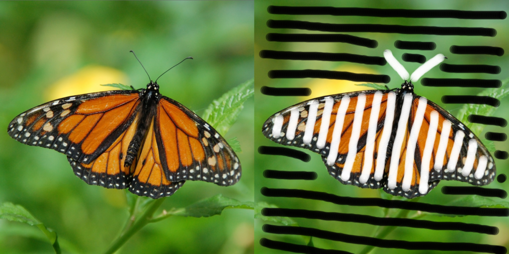 Left: The original picture. Right: An illustration showing which part of the butterfly picture I want to keep.