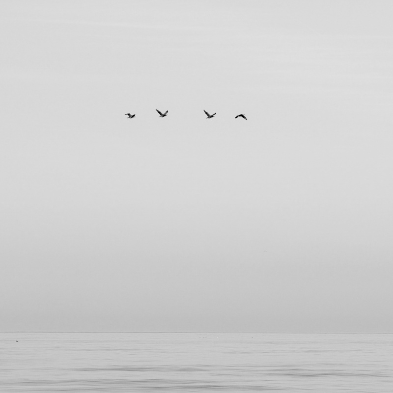 A black-and-white rendition puts the bird silhouettes in the spotlight even more. That makes the overall mood a bit more melancholy.