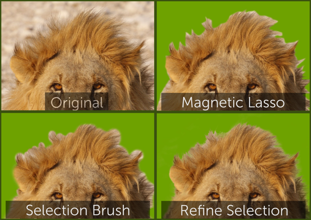 selections of lion