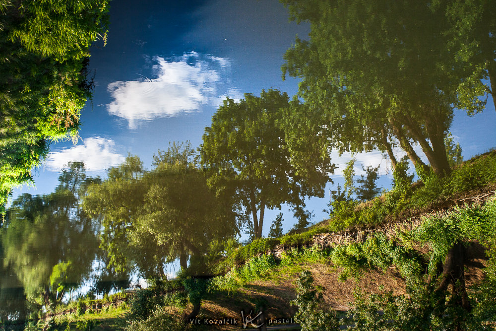 With the reflection emphasized like this, the scene looks like it was taken from somewhere far below the trees. Canon 350D, Macro-Revuenon 24/4, 1/40 s, approx. f/8, ISO 100, focal length 24 mm