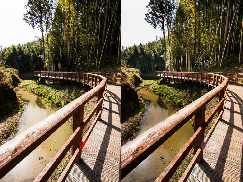 The original forest, and the same forest after brightening and darkening. Canon 40D, Canon EF-S 10-22/2.5-4.5 IS, 1/100 s, f/8, ISO 100, focal length 10 mm