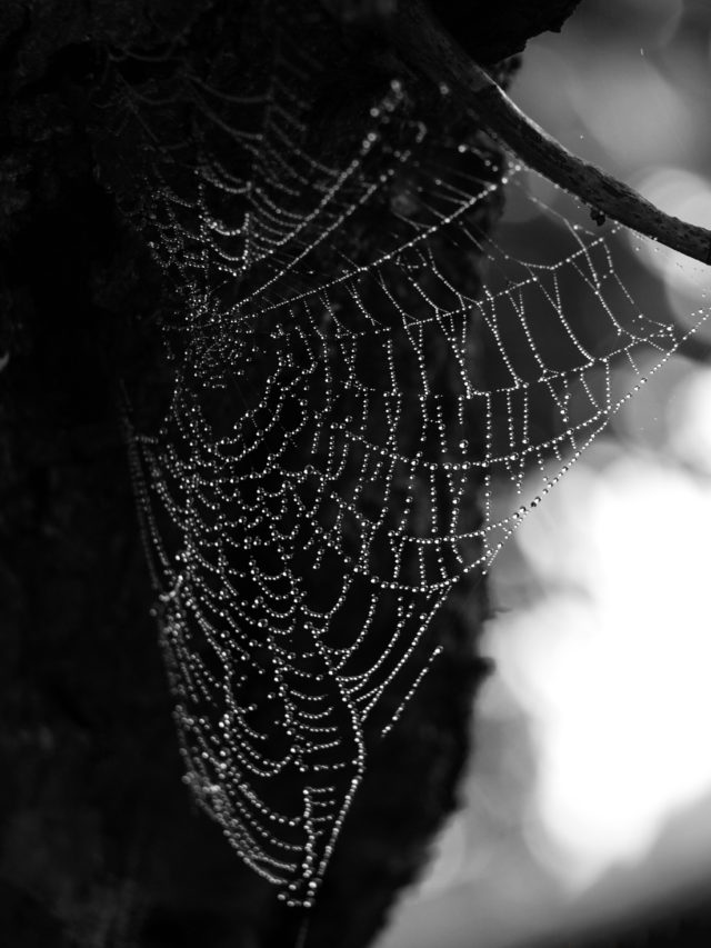 In autumn, capture water drops on spiderwebs.Olympus E-420, Zuiko 40-150 f/4-5.6, 1/200 s, f/5.3, ISO 400, 119 mm