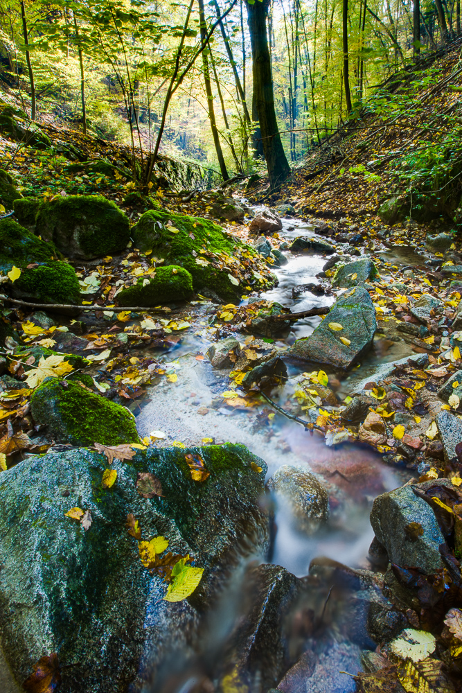 A forest stream.
