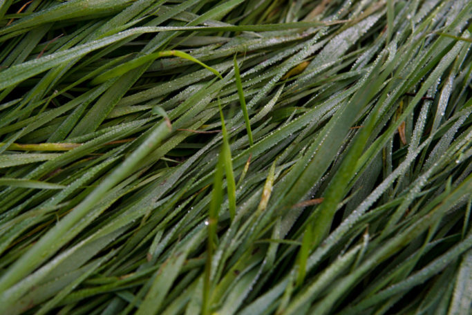 6 Tips for Shooting Outdoors: grass with dewdrops.