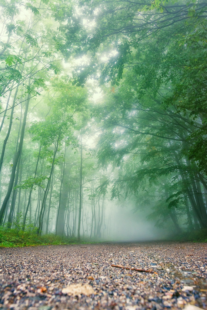 Your Step-By-Step Guide to Photographing and Editing Foggy Landscapes: a forest path in a fog.