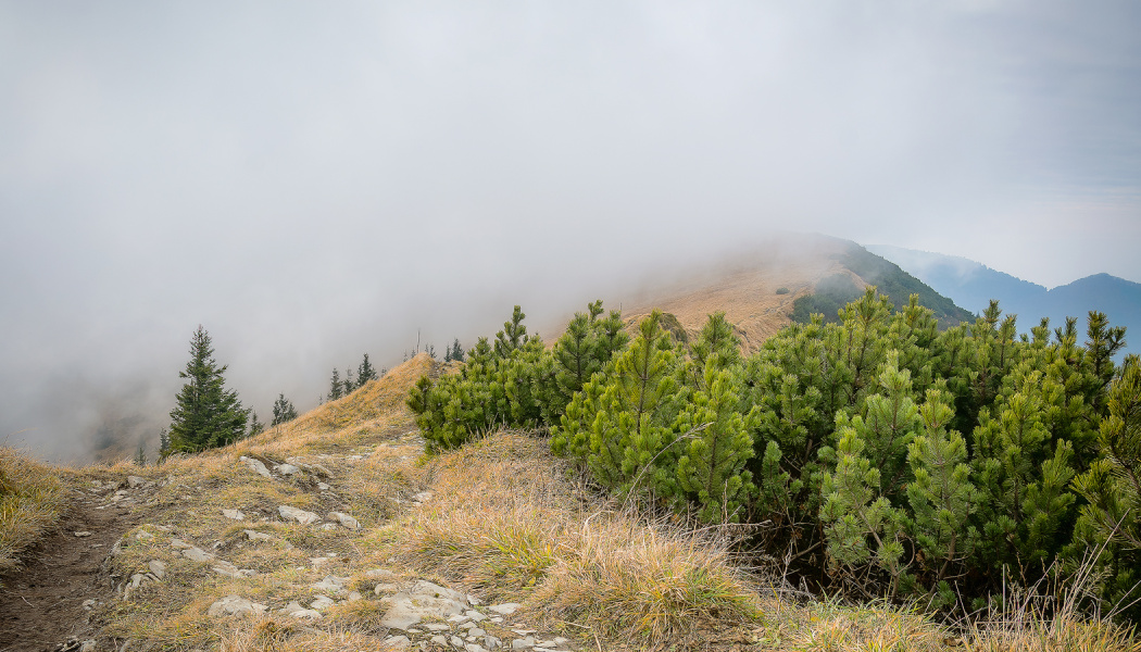 Your Step-By-Step Guide to Photographing and Editing Foggy Landscapes