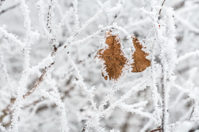 The Magical World of Glaze Ice: photo of a glaze on leaves.