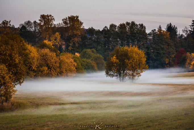 How to Photograph Fog: a meadow in the fog.