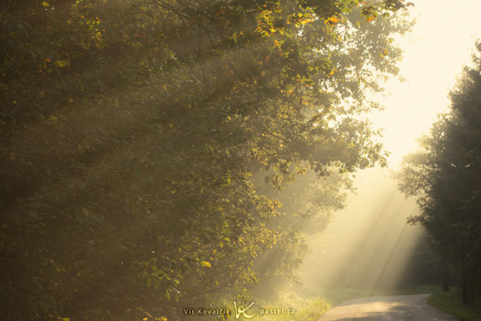 How to Photograph Fog: rays of sunlight a the morning fog.