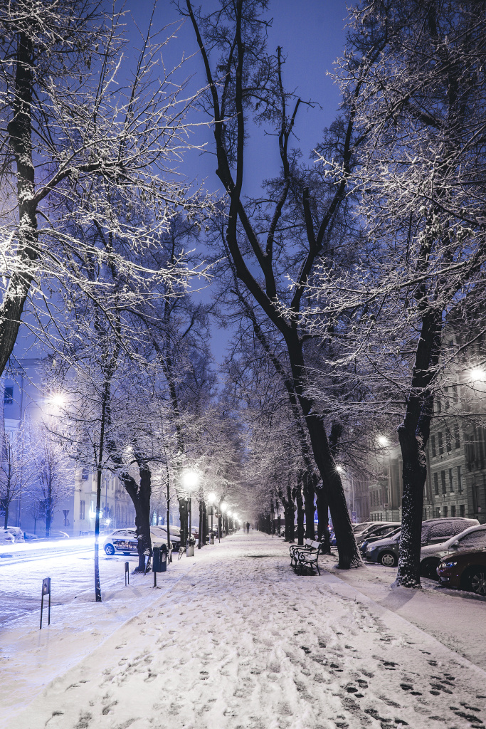 Discover the Wonders of Winter City Photography: lines of trees.