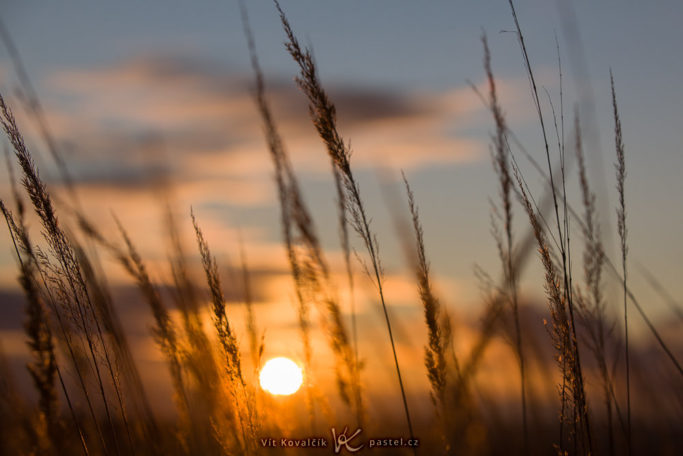 How to Photograph with the Sun in the Frame: grasswith the sun in the background.