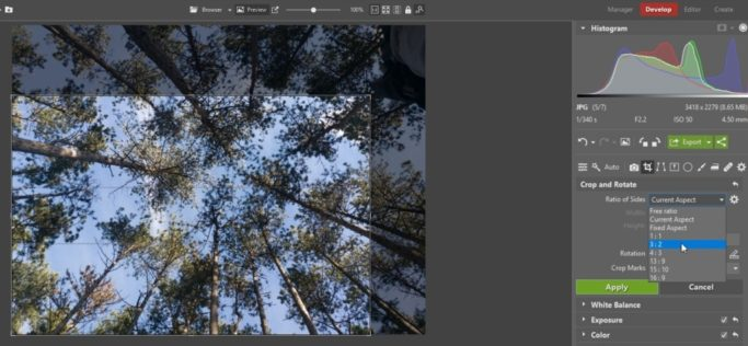 Basic Edits to Improve Photos From Your Phone: improving composition by cropping a photo.