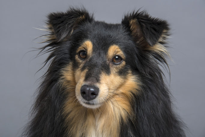 How to Photograph Dogs: a dog photographed with an external flash.