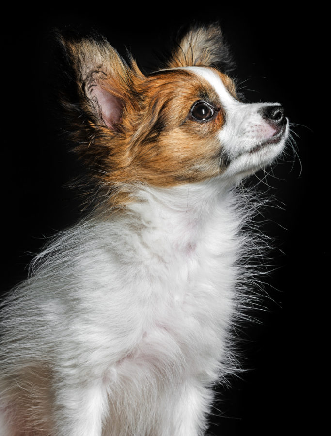How to Photograph Dogs: photo of a dog on a black background.