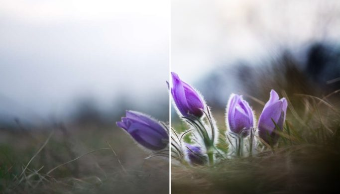 Bring Flower Photos to Life: It Takes Just 3 Basic Edits