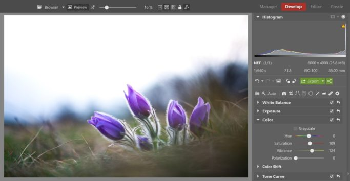 Bring Flower Photos to Life: photo with increased saturation and vibrance.