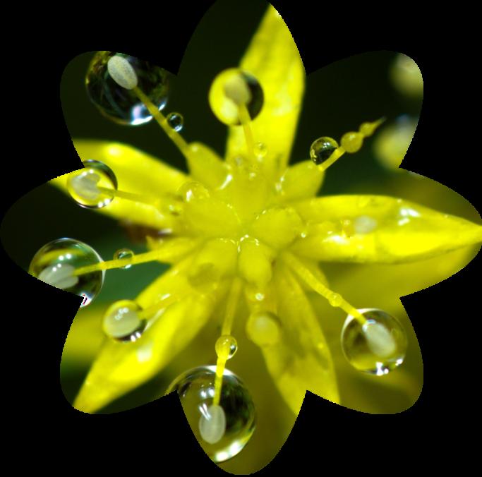 final flower-shaped crop.