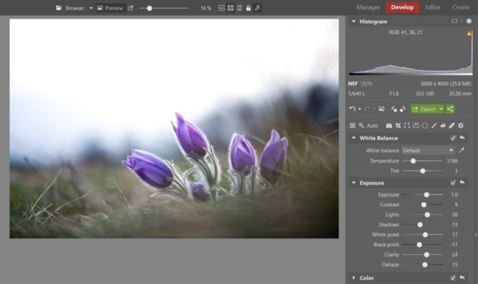 Bring Flower Photos to Life: brightened photo of a pasqueflower.