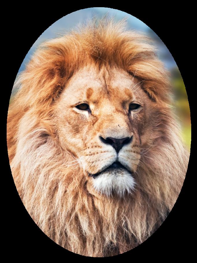 elliptical crop of a lion.