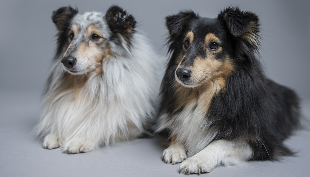 Photographing Dogs: Get Beautiful Dog Portraits Indoors and Outdoors