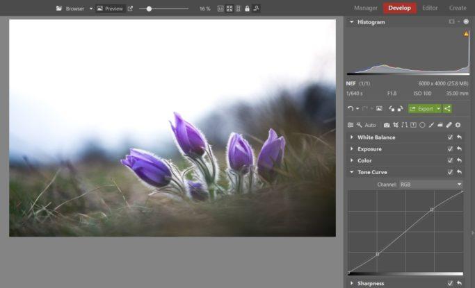 Bring Flower Photos to Life: pasqueflower edited by a tone curve.