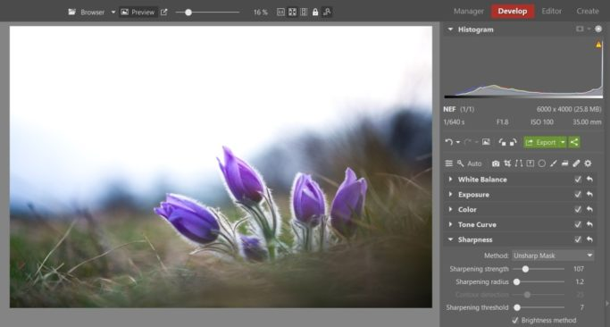 Bring Flower Photos to Life: sharpened pasqueflower.