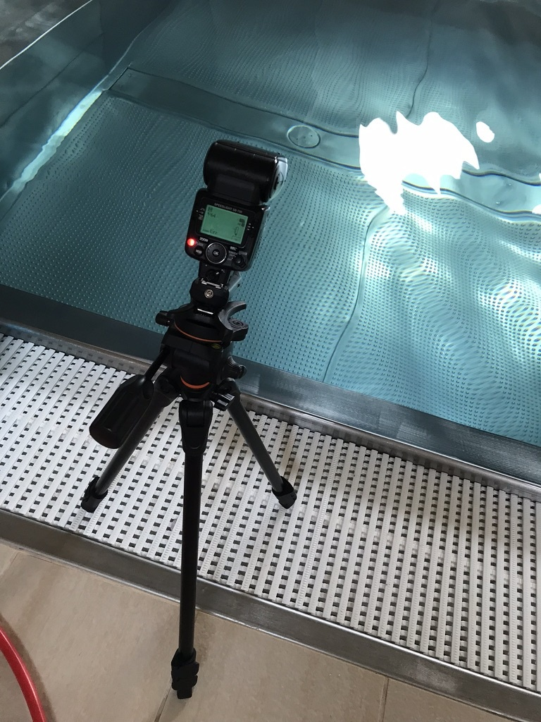 Underwater Photography - flash