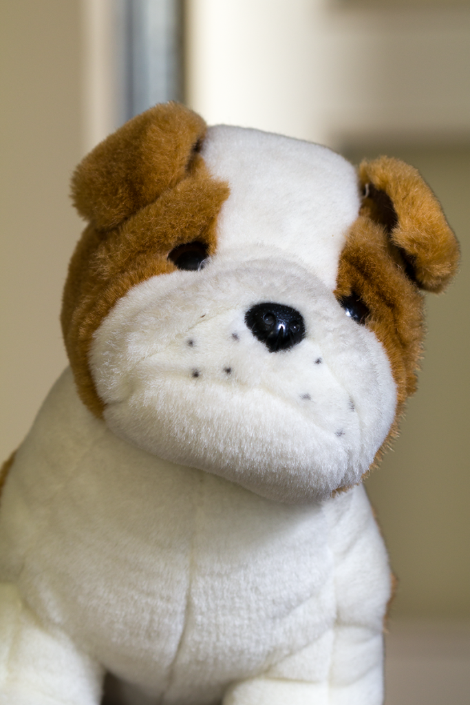 Photographing portraits in a combined light: a stuffed animal photographed with a longer exposure.