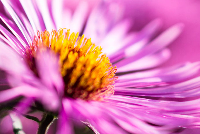 Macro or closeup: a macro shot of a flower.