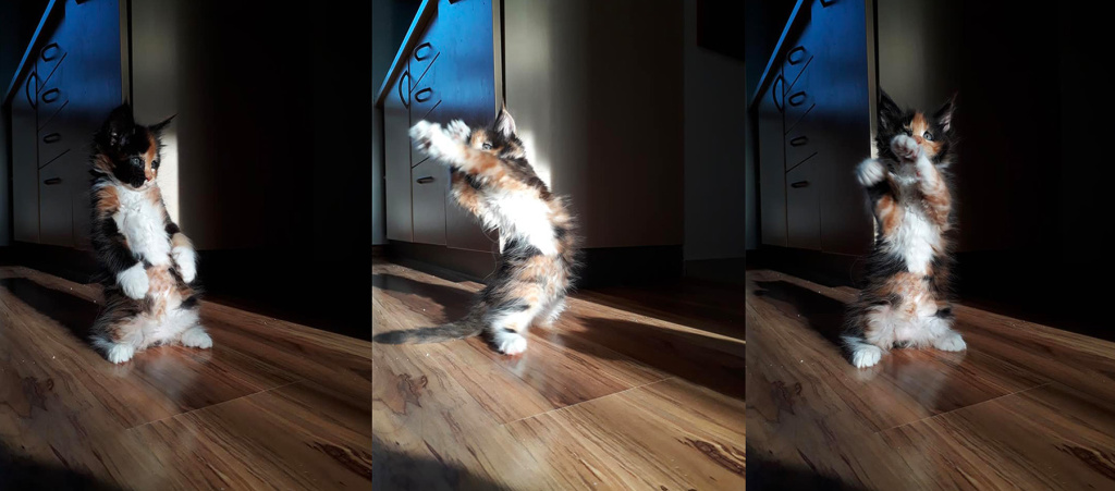 How to Take Cat Photos That Will Attract and Amuse - cat yoga