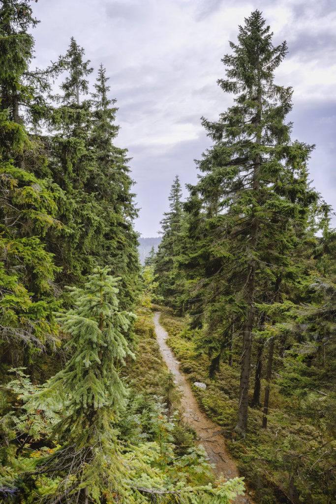 A New Angle on Landscape Photography - forest path