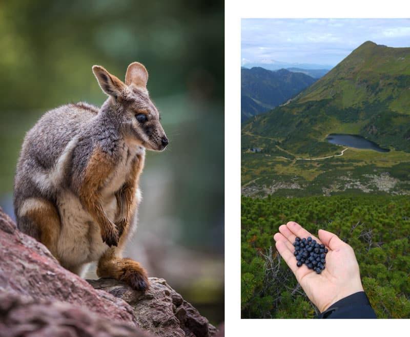 How Do You Create a Photo Collage - source photos